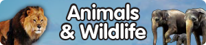 Animals & Wildlife
